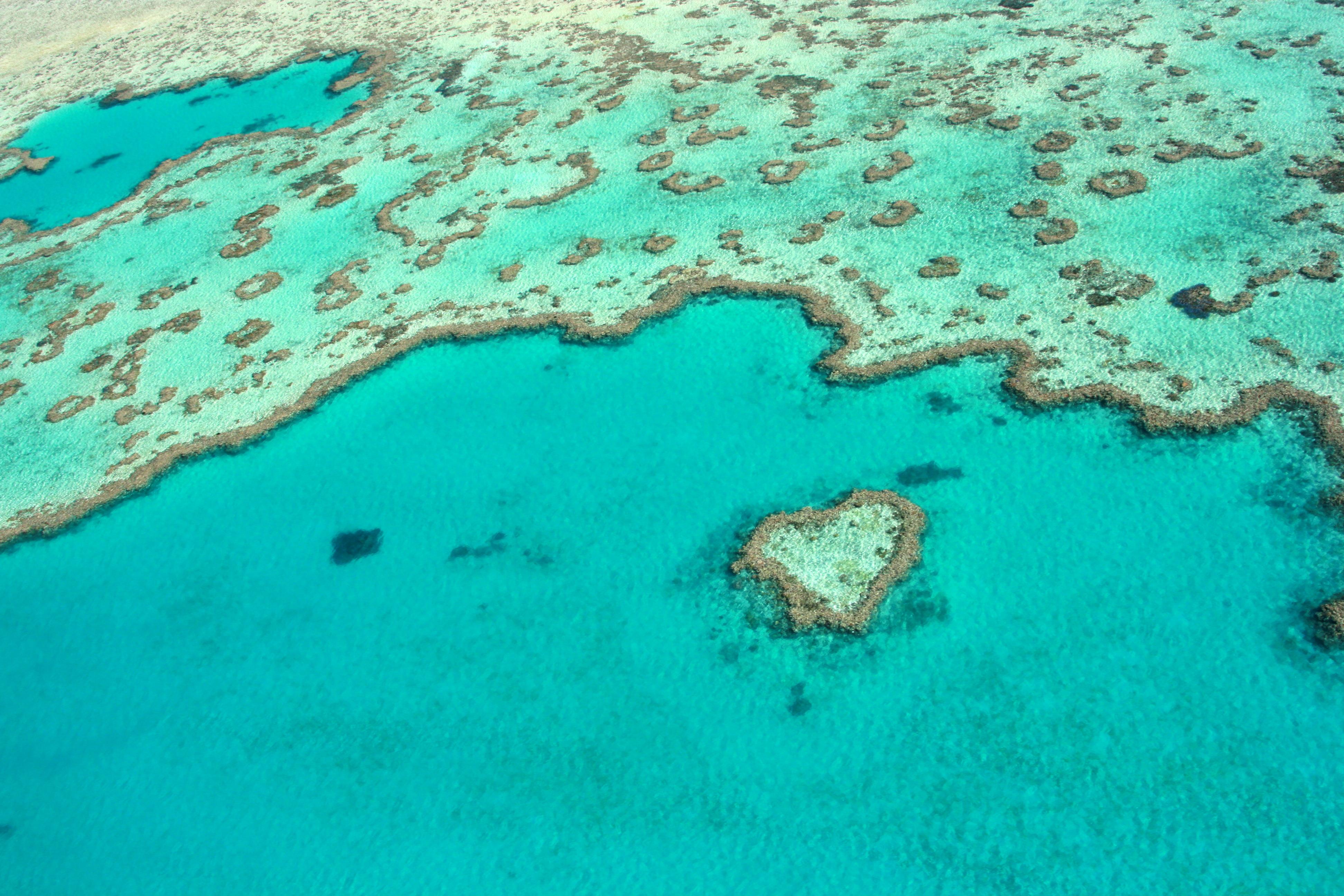 Au whitsundays heart reef wizard